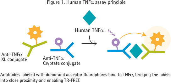 HTRF-Assay für humanes TNFα