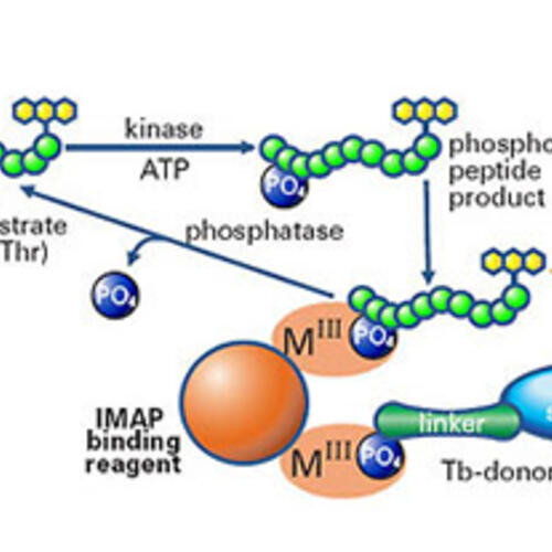 IMAP TR-FRET generische Kinase- und Phosphatase-Assays