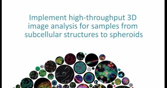 3D Image Analysis from Subcellular Structures to Spheroids